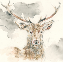 """Head of a Stag"" by Andy Broderick"