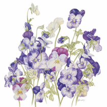 """Viola Bundle"" by Emma Jane Bennett"