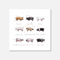 Oink Limited Edition Print