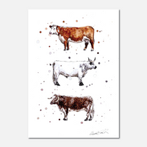 Native Cattle Breeds Limited Edition Print