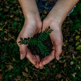 Trend: Sustainability