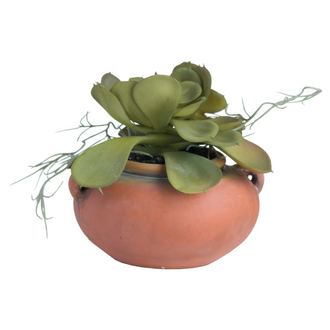 Potted Succulent With Roots