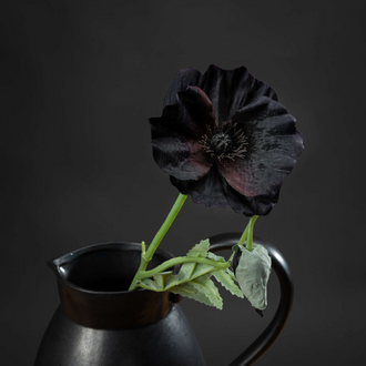 Black Wild Poppy