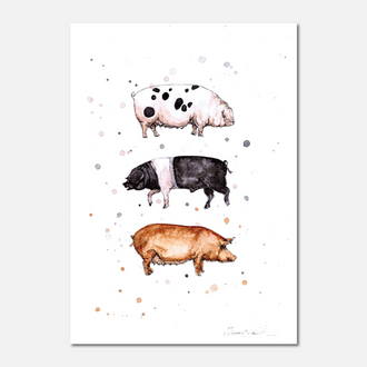Native Pig Breeds Limited Edition Print