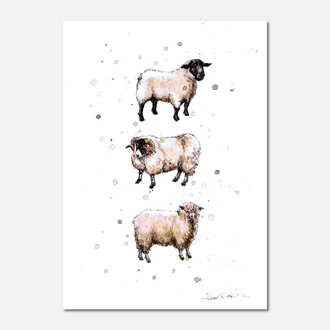 Native Sheep Breeds Limited Edition Print