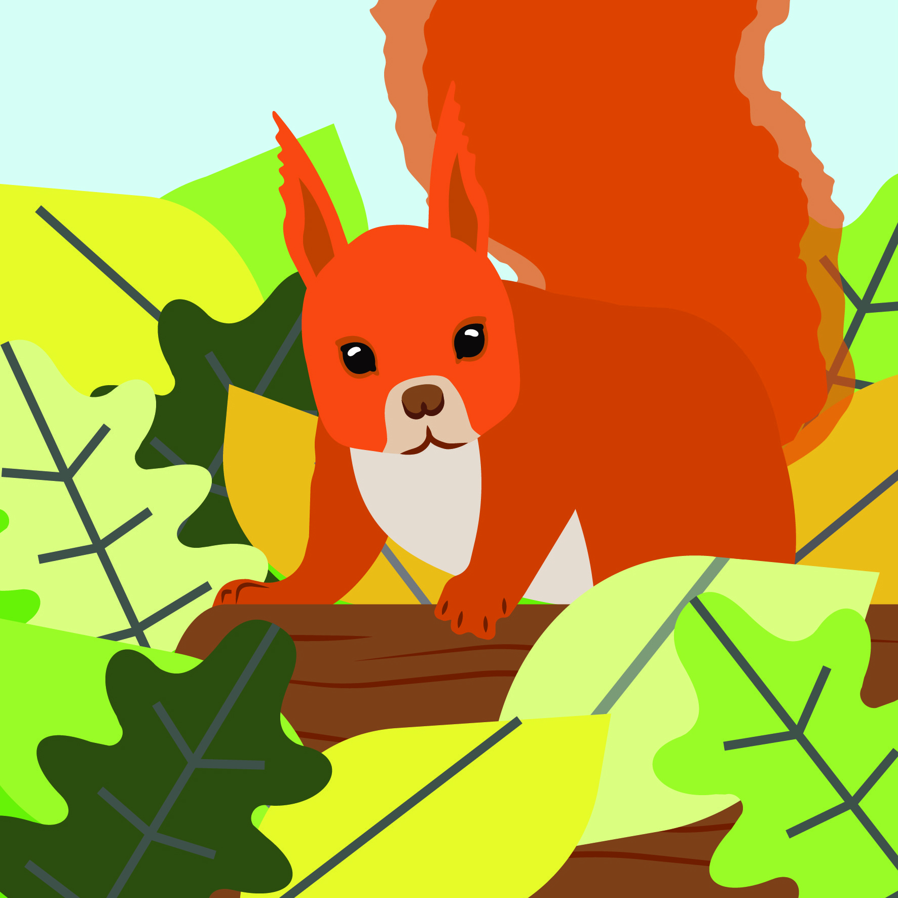 COUNTRYSIDE: SQUIRREL