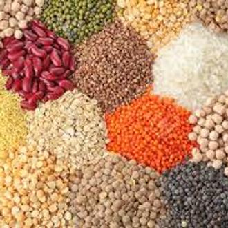 Organic Grains and Legumes